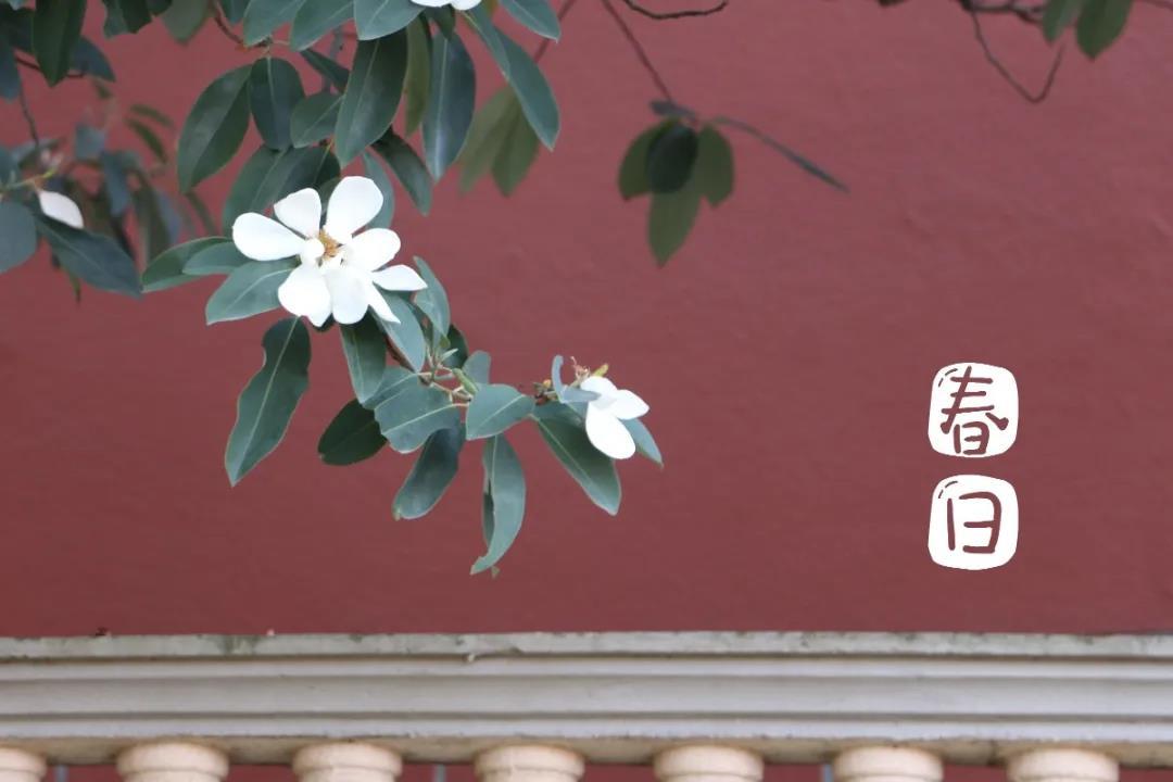 春光正好,播种希望 | 记金华米6app下载小学部植树节活动